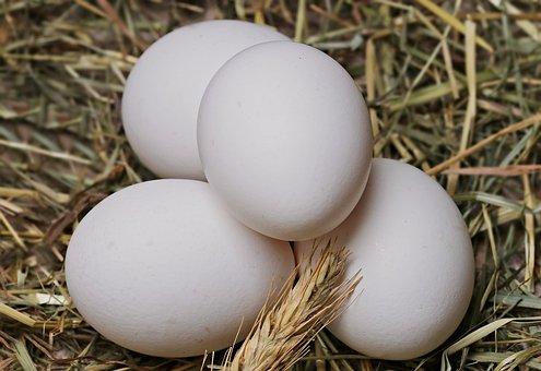 egg-2048476__340