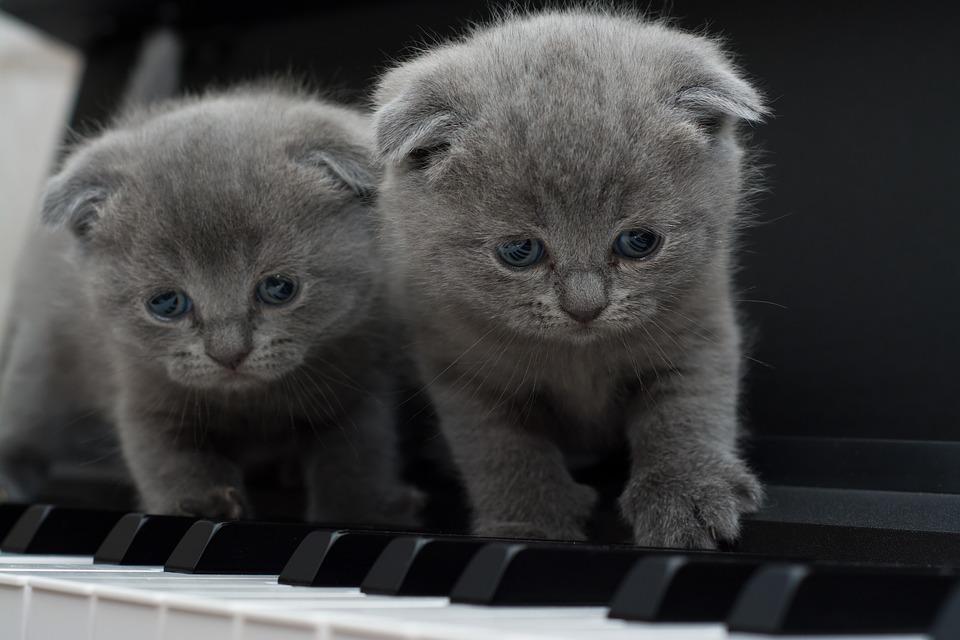 cat-1845787_960_720